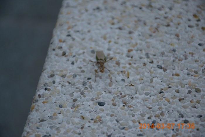 hello, 螳螂~~~~